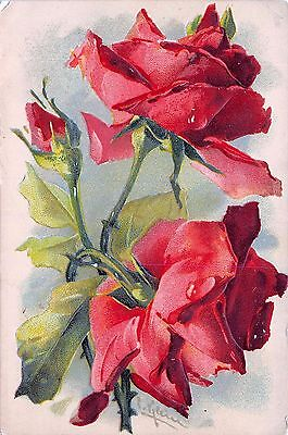H538        ROSES POSTCARD by CATHERINE KLEIN