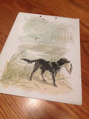 Vintage Very Early Calendar Page with Flat Coated Retriever Dog - 1894