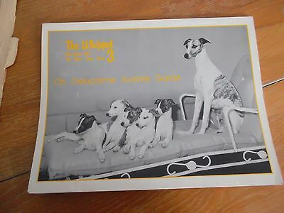 The Whippet Magazine May - Jun 1985 V8 #3 Usa American Dog Breeder Show Crufts