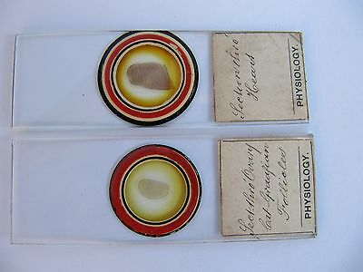 2 SUPERB Microscope Antique Specimen Slides . PHYSIOLOGY
