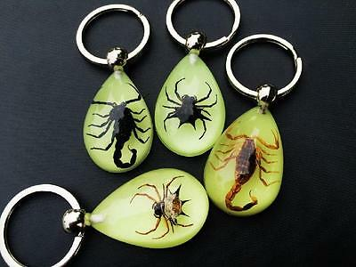 4 PCS real spider scorpion insect jewelry glow in the dark back drop keychain