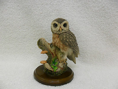 Country Artists Little Owl 01586