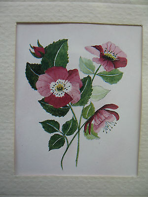 Original Miniature vintage picture of Rose signed by Emma Daniels madeinEngland