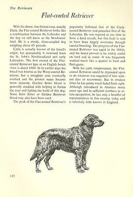 "The Flat Coated Retriever - Vintage Dog Art Print - Matted ""G"""