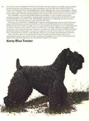 Kerry Blue Terrier - Vintage Dog Print - 1976 Cozzaglio