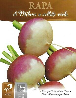 Vegetable  Turnip Milan A Colletto Viola 10 Gram ~ 5000 Seeds Pictorial Packet