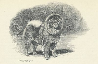 * Chow Chow - Vintage Dog Print - 1942 Megargee