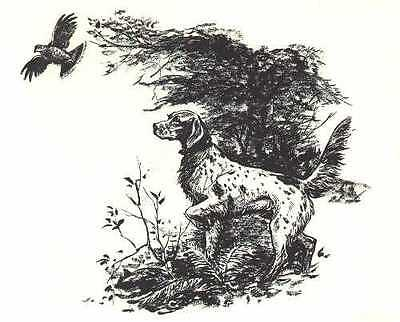 ENGLISH SETTER - 1964 Dog Art Print - MATTED