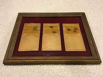 Great Original Old Vintage Record Trout Fly Packet Display With Flies Early 1900
