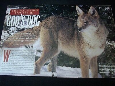 COYOTEs in magazine ads/clipping lot * pictures