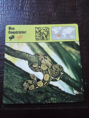 BOA CONSTRICTOR - Photo / Fact Card - Editions Rencontre 1975