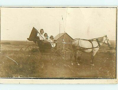 Pre-1920's rppc DOG WATCHES BEAUTIFUL WHITE HORSE PULL CARRIAGE WITH CAT r6255