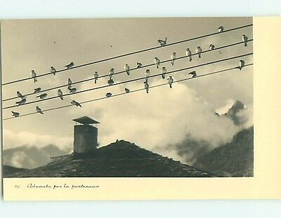 Old rppc MANY BIRDS SITTING ON TELEPHONE WIRES r6742