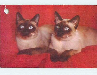 Hole Punch Damage Pre-1980 TWO SIAMESE CATS n0398