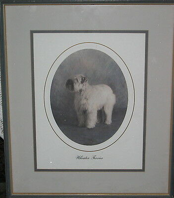 Wheaton Terrier Beautiful Framed Print Great For Your Wall