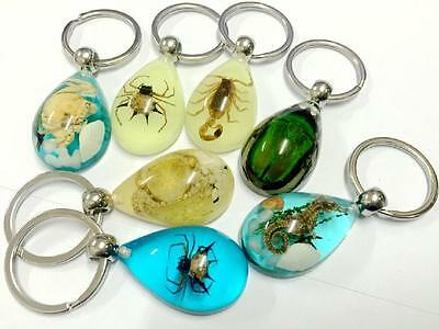 16pc real insect crab spider seadraon beetle scorpion key-chains