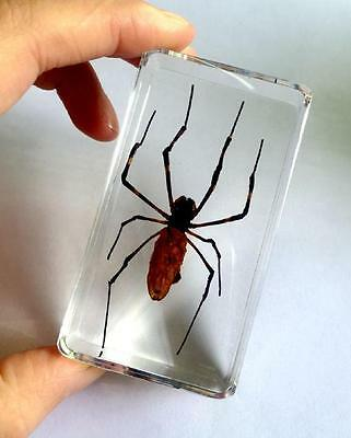 T-01 Spider Insect Specimens In Lucite Paperweight Acrylic Crafts