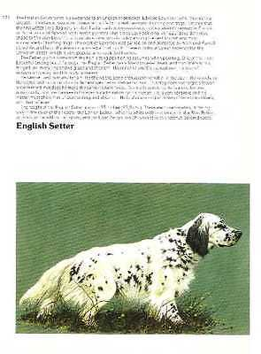 English Setter - Vintage Dog Print - 1976 Cozzaglio
