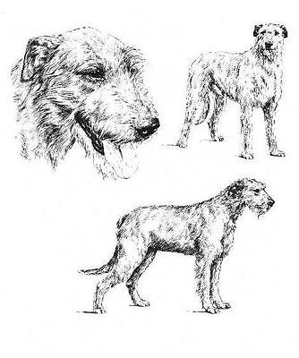 Irish Wolfhound - 1963 Vintage Dog Print - Matted