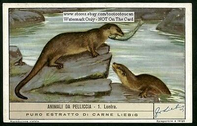 Otter Fishing c60  Y/O Ad Trade Card Pelt Trapping Fur