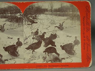 1901 Stereoview Card Guinea Fowl Hunting March Sportman's Paradise Keystone