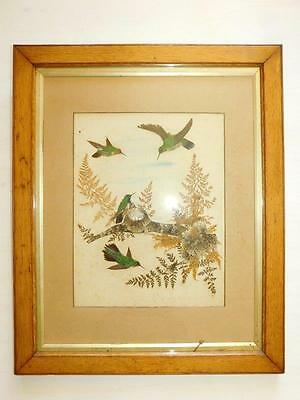 Superb Edwardian Hummingbird Picture made from exotic Bird feathers c1920
