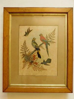 Superb Edwardian Hummingbird & Parrot Picture from exotic Bird feathers c1920s?