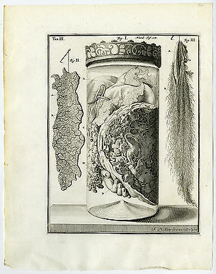 Antique Print-CHILD-ARM-TESTICLE-UNRAVELED-SKIN-TAB III-Ruysch-Mulder-1744