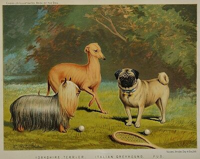 C1890 Chromolithograph The Illustrated Book of the Dog Cassell ~ Pug, Greyhound