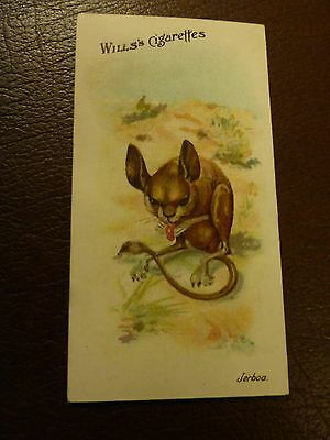 Wills Wild Animals Of The World #17 Long Eared Jeroba Vg Condition
