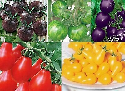 20pcs Seeds Red Cherry Tomato Organic Fruit Vegetable Plant 2017