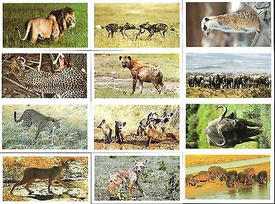 1990,john Player-Grandee,african Wildlife,full Set Of 30 Cards