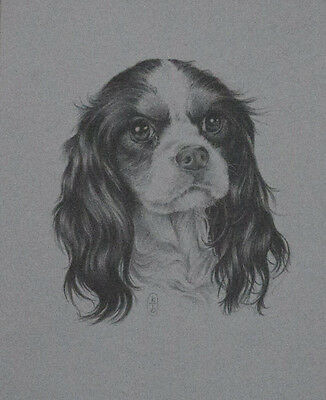 CAVALIER KING CHARLES SPANIEL, ART PRINT OF A PENCIL LINE DRAWING. Dog, Dogs.
