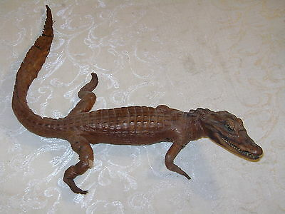 """Vintage Taxidermy Real Alligator Baby 23"""" Small Stuffed"""