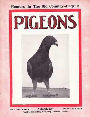 Pigeons Magazines~August 1907~Homers In The Old Country~Authentic~Rare