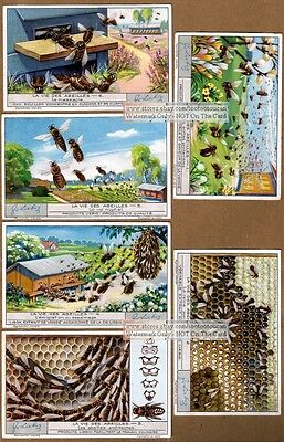 Honey Bee Hive Keeping And Apiculture SIX Pretty 1920s Tradr Cards