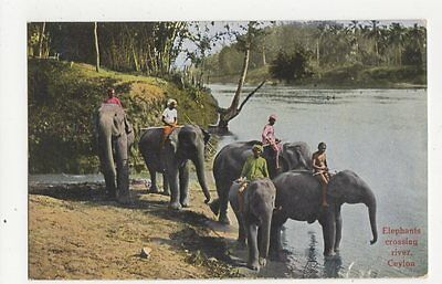 Elephants Crossing River Ceylon Vintage Postcard 0890