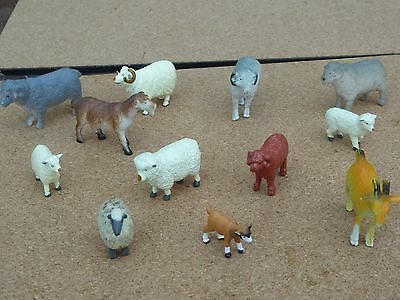Farmyard collection of sheep and goats