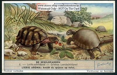 Egyptian And Greek Tortoise Turtle 50 Y/O Trade Ad  Card