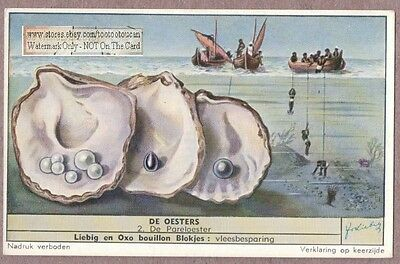 Sea Food - Oyster - Pearls - Divers  Auster 50+ Y/O Trade Ad Card