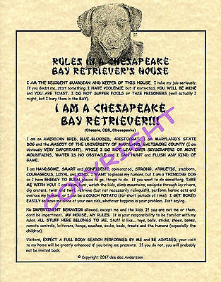 Rules In A Chesapeake Bay Retriever's House