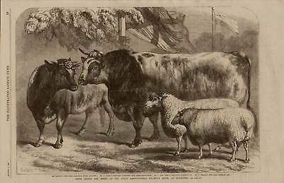 Large 1868  Historical Print  Of Cattle And Sheep At Leicester Show