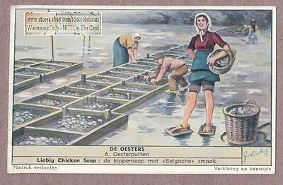 Sea Food Tending The Oyster Farm  Auster 50+ Y/O Trade Ad Card