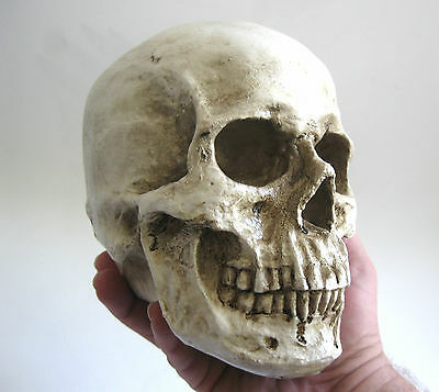 Hard Resin Human Skull Realistic Scary Paperweight Halloween Party Prop 7""