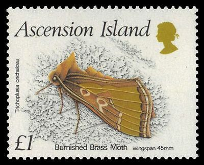 """ASCENSION 439 (SG455) - Burnished Brass Moth """"Diachrysia orichalcea"""" (pa42329)"""
