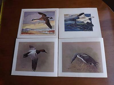 Carling Breweries Christmas Cards Lot Of 4 Birds Goose Canvasback Duck Loon