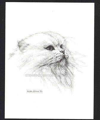 #397 WHITE PERSIAN facing right * cat art print *  pen & ink done by Jan Jellins