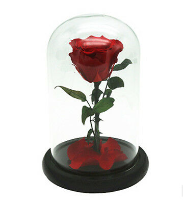 beauty and the beast belle princess rose enchanted Preserved Fresh flower