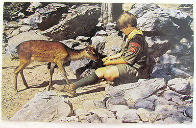 Resica Falls Boy Scouts Valley Forge Council Marshalls Creek Pa Vintage Postcard