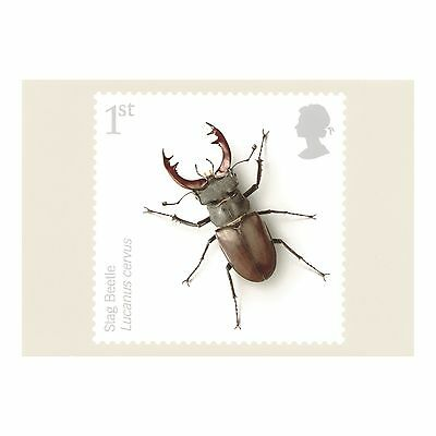 Stag Beetle – Insects Series 2008 Royal Mail Phq 310 Postcard